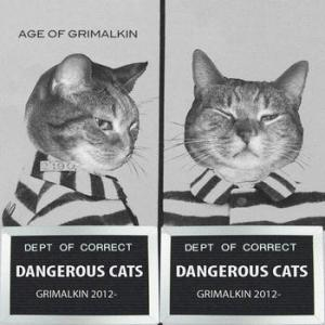 Dangerous cats